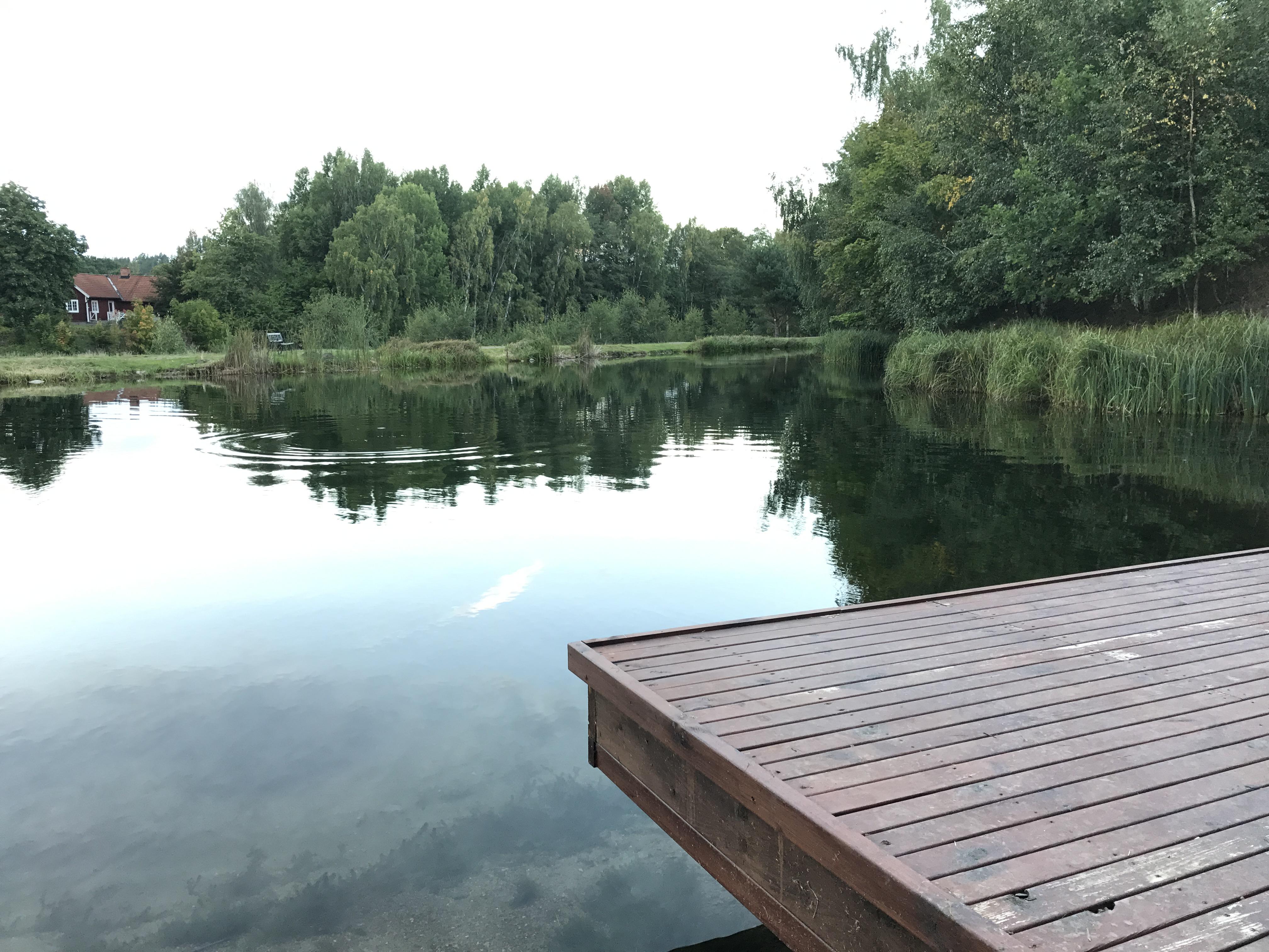 Utsikt från fiske-lodgen